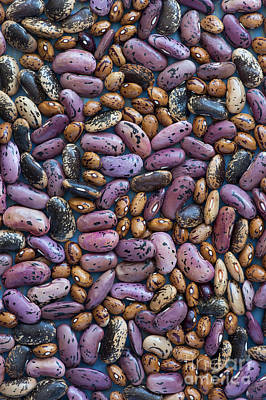 Beans Art Print by Tim Gainey
