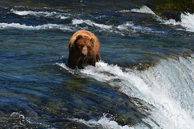 Photograph - Bear At The Top Of The Falls by Patricia Twardzik