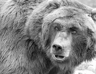 Photograph - Bear Black And White by Steve McKinzie