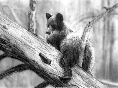 Bear Bottom Art Print by Paul Sachtleben