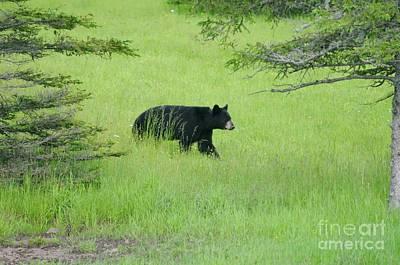 Photograph - Bear Coming by Sandra Updyke