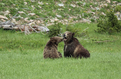 Photograph - Bear Conversation  by Angelique Rea