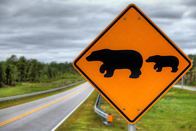 Photograph - Bear Crossing by JC Findley
