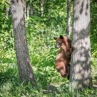 Photograph - Bear Cub Climb by Patti Deters