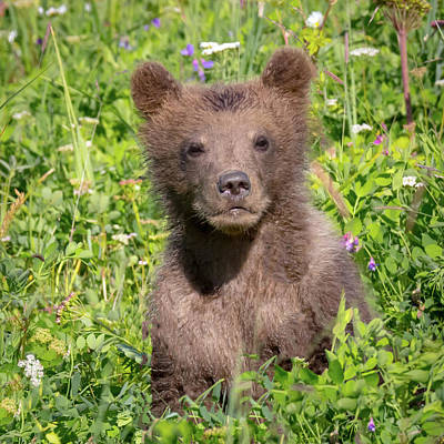 Photograph - Bear Cub Cuteness by Jack Bell