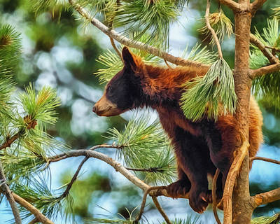 Digital Art - Bear Cub In A Tree 3 by Ernie Echols