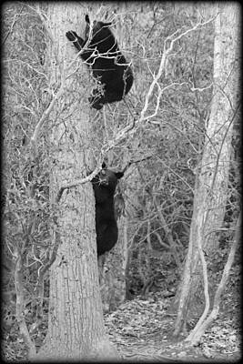 Photograph - Bear Cubs by Tammy Schneider