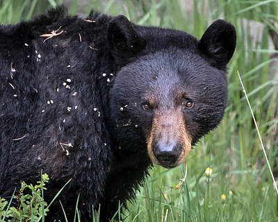 Photograph - Bear Down by Jack Bell