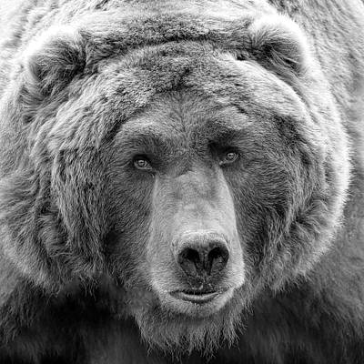 Photograph - Bear Face Black And White by Steve McKinzie