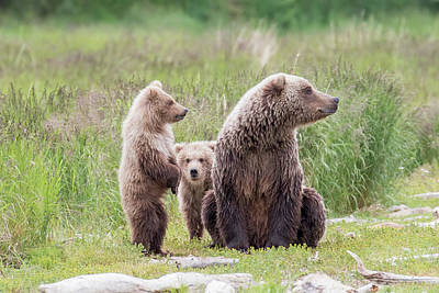Photograph - Bear Family by Phil Stone