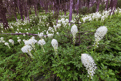 Photograph - Bear Grass Forever by Mark Kiver