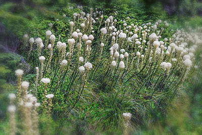 Photograph - Bear Grass Near Mt Hood Or Dsc05413 by Greg Kluempers
