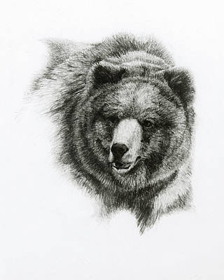 Bear Art Print by Heather Theurer