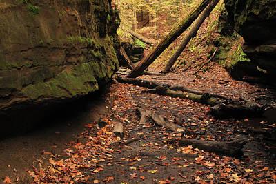 Bear Hollow In Autumn 1 Print by Greg Matchick
