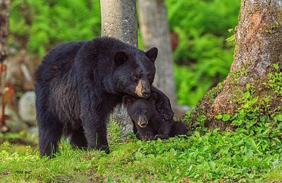 Photograph - Bear Hugs by Dale J Martin