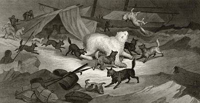 Arctic Drawing - Bear Hunt From Arctic Explorations In by Vintage Design Pics