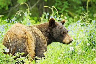 Bear In Flowers Art Print
