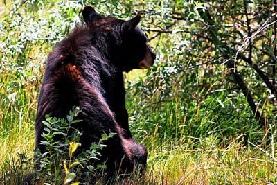 Photograph - Bear In Forest by Matt Harang