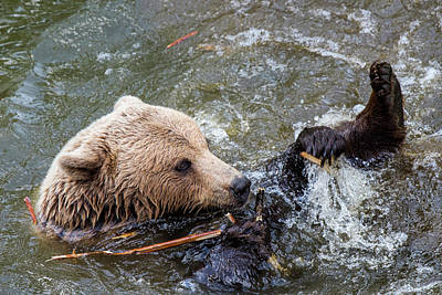 Photograph - Bear In The Water by Thomas Schreiter