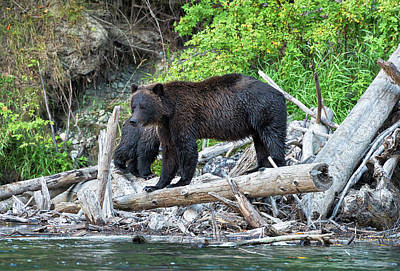 Photograph - In The Great Bear Rainforest by Scott Warner