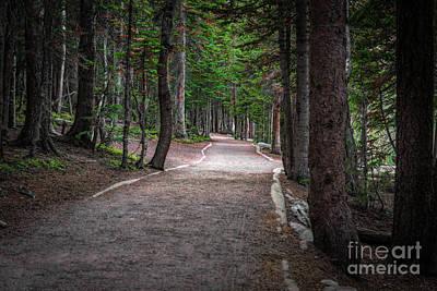 Photograph - Bear Lake Trail by Jon Burch Photography