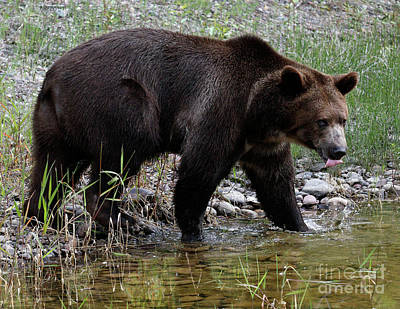 Photograph - Bear Lick by Art Cole