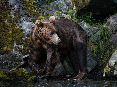 Photograph - Bear Looking Around by Gloria Anderson