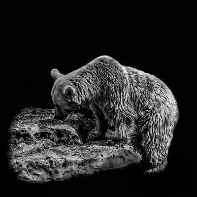 Photograph - Bear by Mark Perelmuter