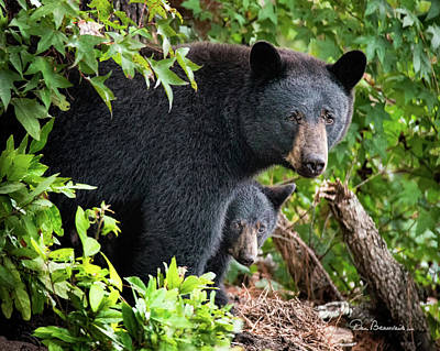 Photograph - Bear Mom And Cub 9539 by Dan Beauvais