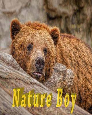 Photograph - Bear Nature Boy by LeeAnn McLaneGoetz McLaneGoetzStudioLLCcom