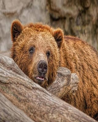 Photograph - Bear Nature Wear by LeeAnn McLaneGoetz McLaneGoetzStudioLLCcom