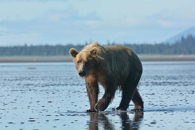 Photograph - Bear Pause 2 by Fraida Gutovich