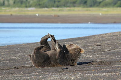 Photograph - Bear Playing With Stick by David Wilkinson