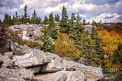 Photograph - Bear Rocks At Dolly Sods Wilderness by Cynthia Staley