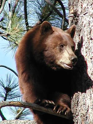 Photograph - Bear Sigh by Ernie Claudio