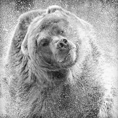 Photograph - Bear Spin by Steve McKinzie