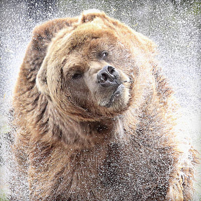 Photograph - Bear Spray by Steve McKinzie