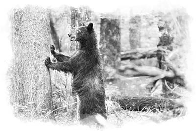 Bear Standing Art Print