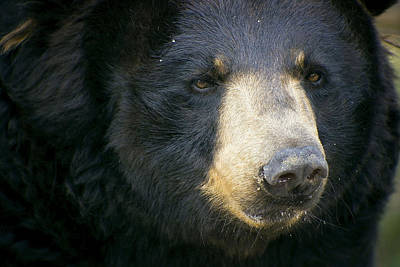Photograph - Bear With Me by Cheri McEachin