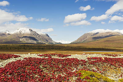 Bearberry Leaves In The Foreground Art Print by Ray Bulson