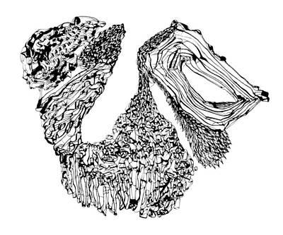 Drawing - Beard by Daniel Schubarth