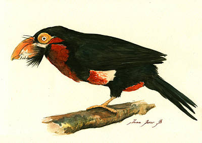 Toucan Painting - Bearded Barbet by Juan Bosco