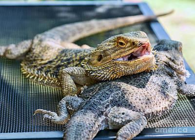 Photograph - Bearded Dragon Friends by Eddie Yerkish