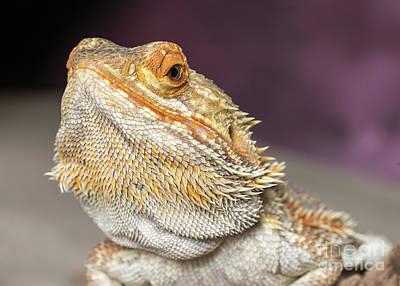 Photograph - Bearded Dragon by Les Palenik