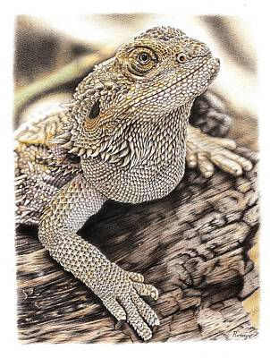 Drawing - Bearded Dragon by Remrov