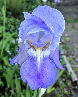 Wall Art - Photograph - Bearded Iris Springrtime by Valerie Shinn
