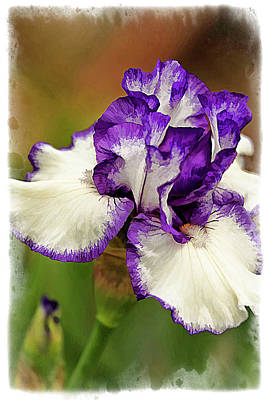 Houseplant Digital Art - Bearded Iris Series 2 by Geraldine Scull
