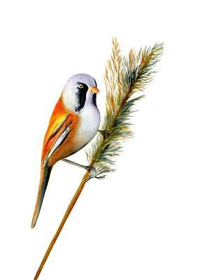 Painting - Bearded Tit Bird by Alison Langridge