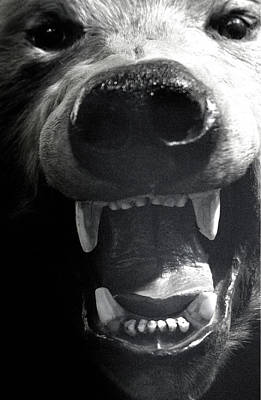 Beared Teeth Art Print by Jez C Self