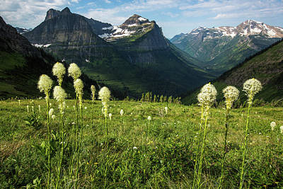 Photograph - Beargrass - Glacier Np by Jay Moore
